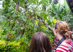 Coffee Plantation at Kilimanjaro