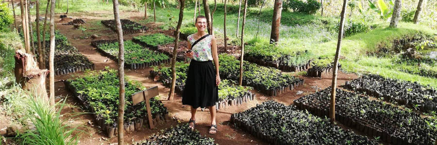 Mweka Tree Nursery